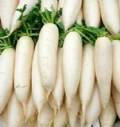 Japanese Radish F1 Mooli April Cross - 50 seeds